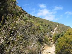 Upper Trail - Bluff Knoll, Stirling Ranges, Western Australia