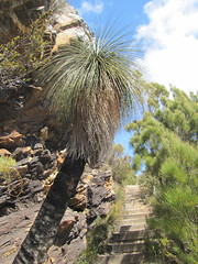 Rocks, Grass-Tree and Track Stairs - Bluff Knoll, Stirling Ranges, Western Australia