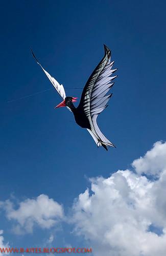 B kites-0047-2