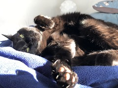 Martha #cat in sun