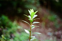 Plant with blurred background