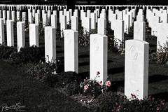 Bayeux War Cemetery Headstones