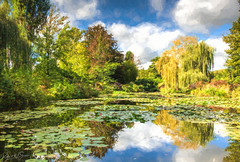 Monet Water Garden - Photo of Amenucourt