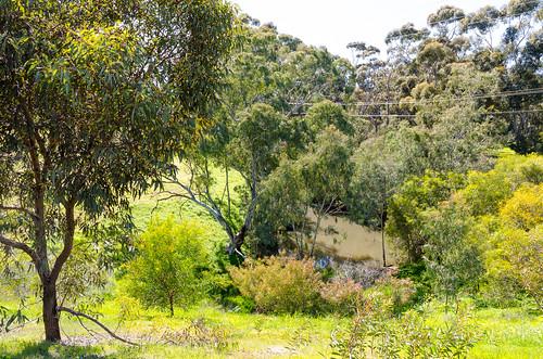 adams creek site A ppt6 east 02 - sept 2019