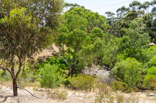 adams creek site A ppt6 east 01 - jan 2019