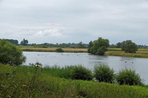 Landscape between Reuver and Swalmen - Limburg