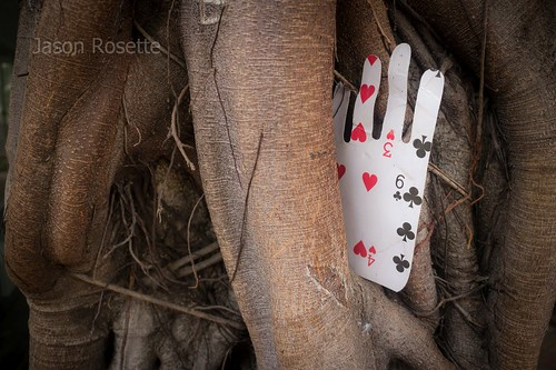 Hand Shaped Playing Card in Tropical Tree (horizontal)