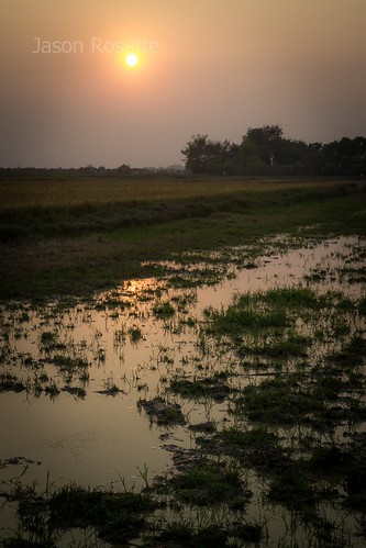 Setting sun reflects on waterlogged rice fields in Asia