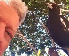 Magpies (2)