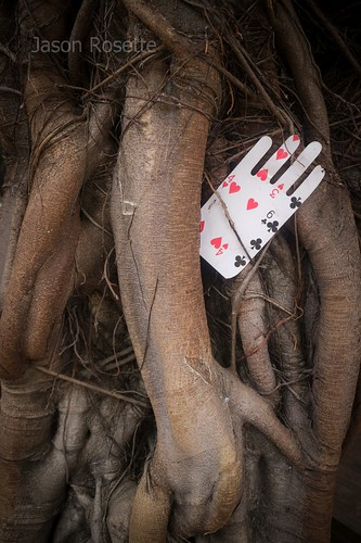 Hand Shaped Playing Card in Tropical Tree #1