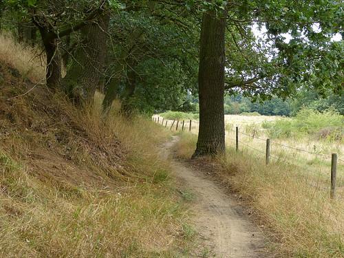 A nice path to follow