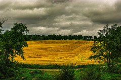 Golden Fields and an Angry Sky