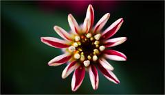 Simple flower [6]