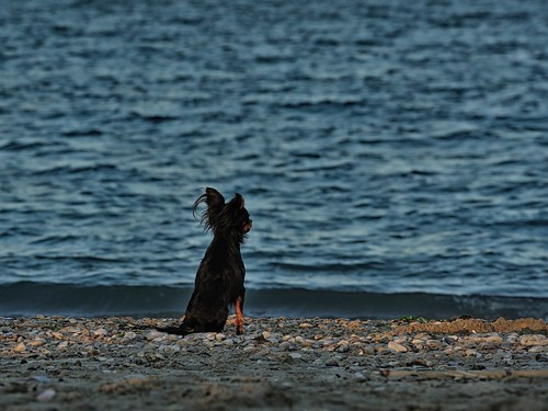 briciola guarda il mare