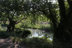 Le chemin des Castor le long du contre-canal de la plaine de l'Abbaye à Villeneuve lez Avignon