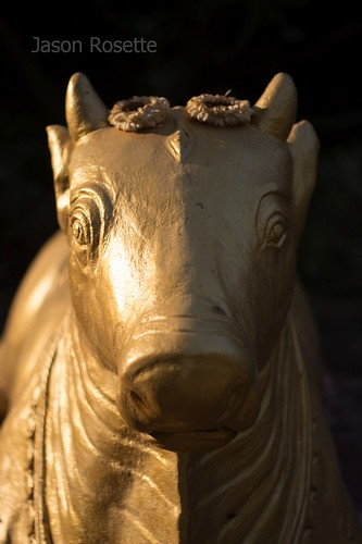 Golden Brahmin Bull Statue with Flowers on Head