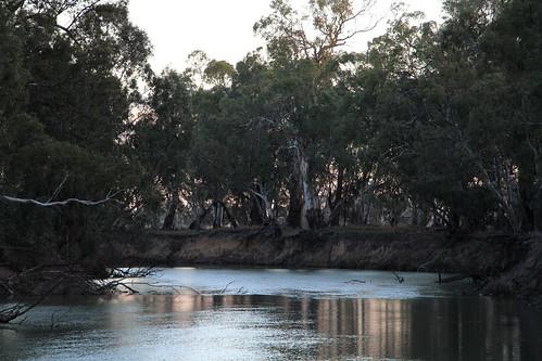 The Murrumbidgee River in Balranald