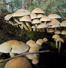 Mushroom hunting Autumn 2019