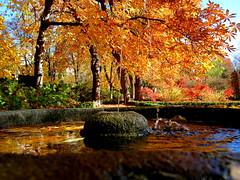 Colores del otoño dentro de un mes más o menos