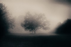Misty Morning Series