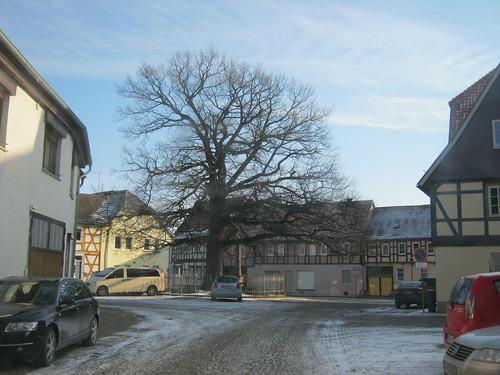 Heringen (Helme): Friedenseiche auf dem Kirchplatz