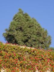 Half Flowers Half Pine