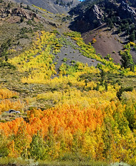 Going Out in a Blaze of Glory, Bishop Creek Canyon 10-19
