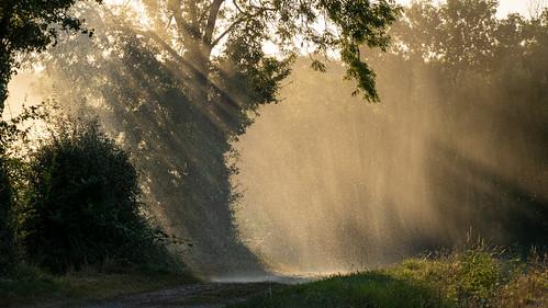 Idyllic rainy sunshine