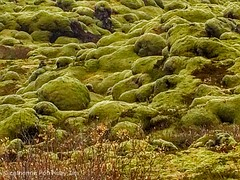Marsh park, Iceland
