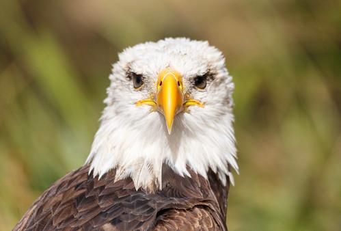 Día Mundial de las Aves 2019.