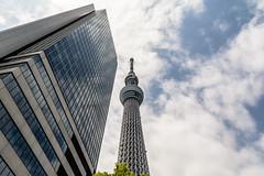 Sumida & Skytree