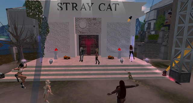 Party at Stray Cat Cemetary!