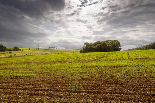 Ellemelle (Ouffet) - Rural scenery - Contre-jour