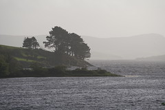 Windswept Coast