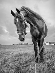 Bokeh horse