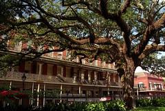 "New Orleans - Jackson Square ""Pontalba Buildings Under Oak Tree"""