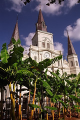 """New Orleans - Jackson Square """"St. Louis Cathedral & Banana Trees"""""""