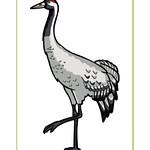 Eurasain Crane Poster