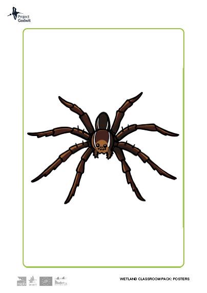 Fen Raft Spider Poster