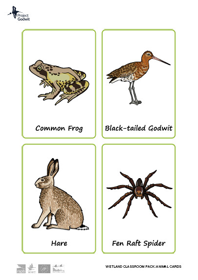 Fenland Animal Cards