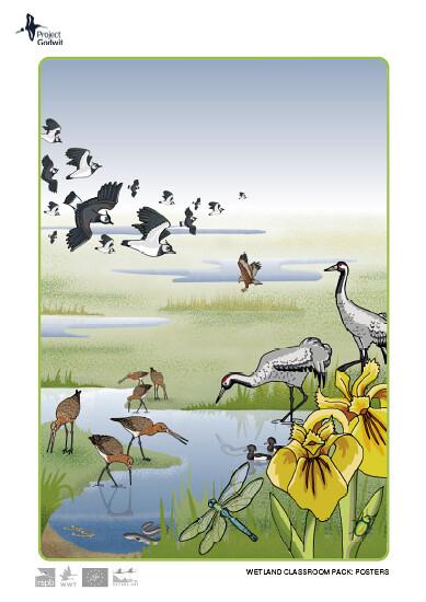 Fenland Landscape Poster