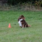 Hundesportferien 2019
