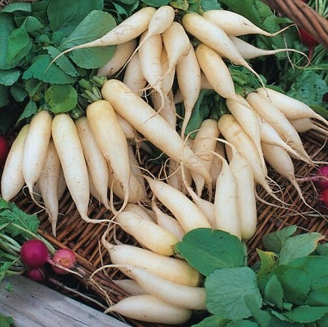 daikon seeds belonging to shiny