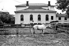 Police horses off duty | Kodak Retina 1 b