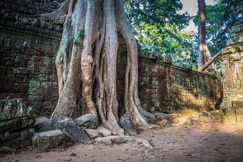 Giant Roots of Tree Devouring Ancient Temple, Siem Reap Cambodia
