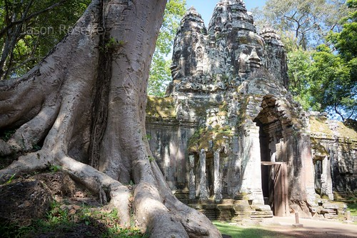 Large Tree Near Bayon Temple Gate, Angkor wat Siem Reap