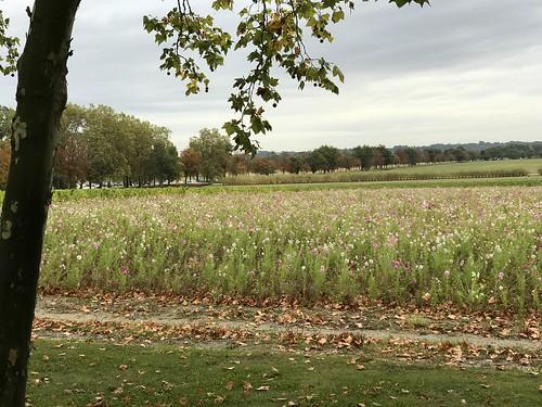425. Fields of flowers, Bordeaux, France