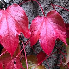 Color of the Season