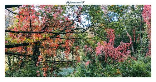 L'automne s'installe à Buhl - Haut Rhin