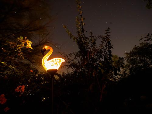 Flamant sous le ciel étoilé